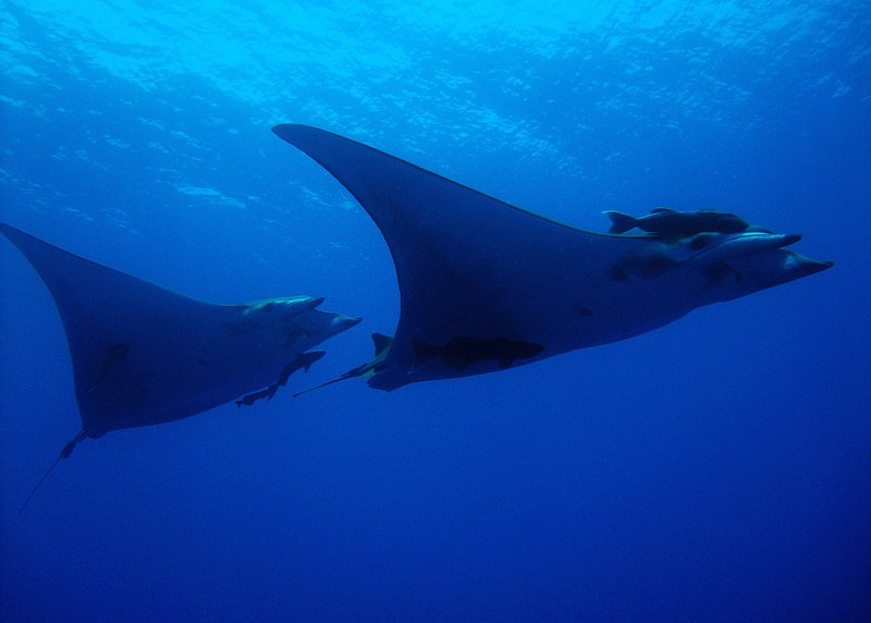 Scuba Dive the Azores -