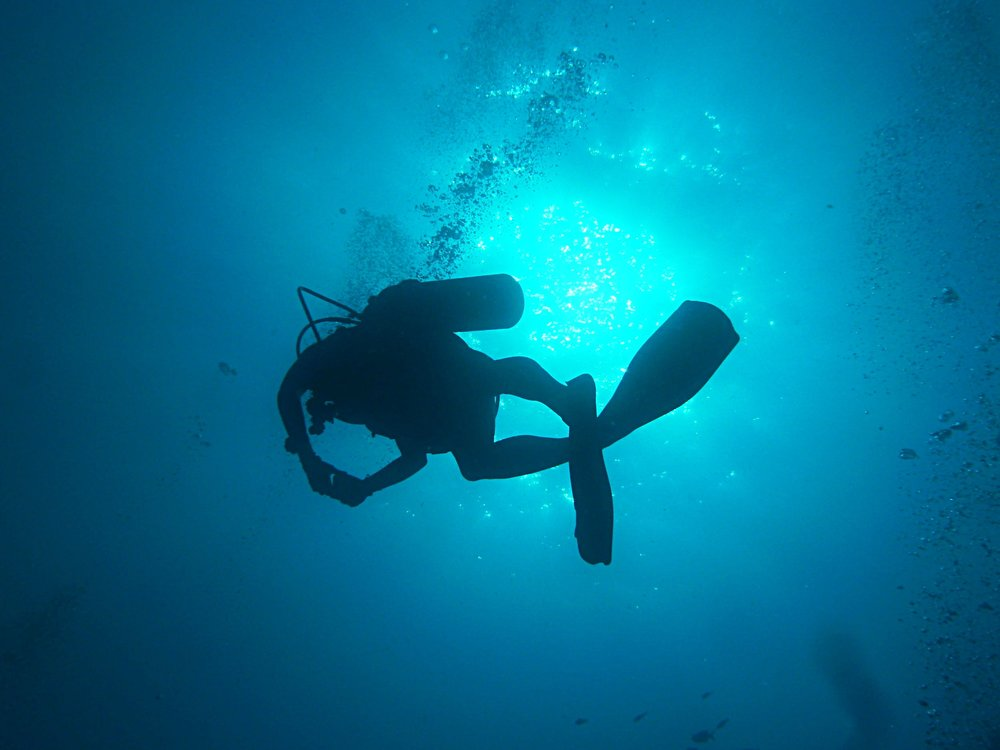 Dive the Azores. -