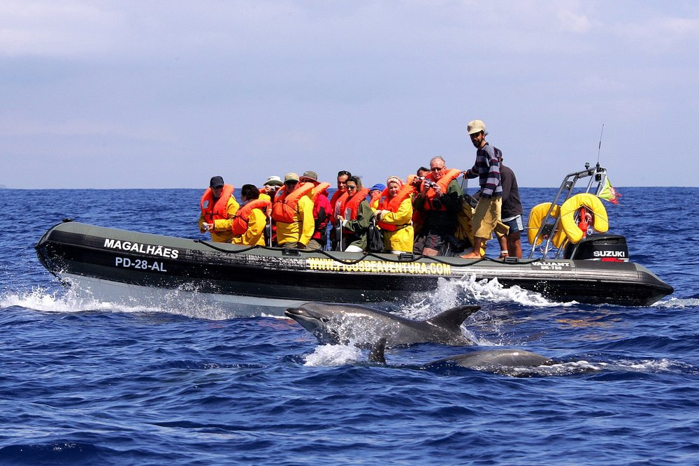 Dolphin and Whale Watching São Miguel - Azores Connections.jpg