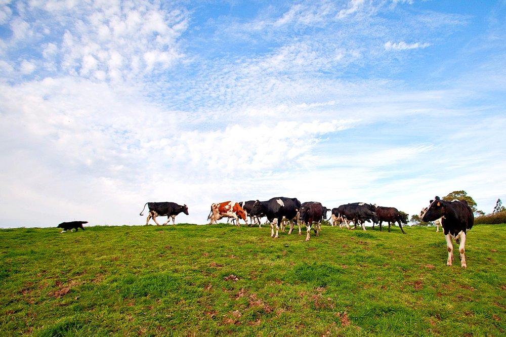 Farm-Tours-São- Miguel-Azores-Connections-2.jpeg
