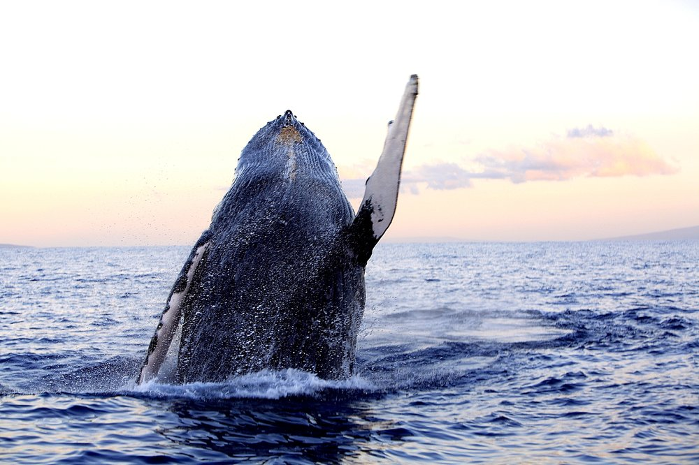 Sea Activities (Whale Watching)