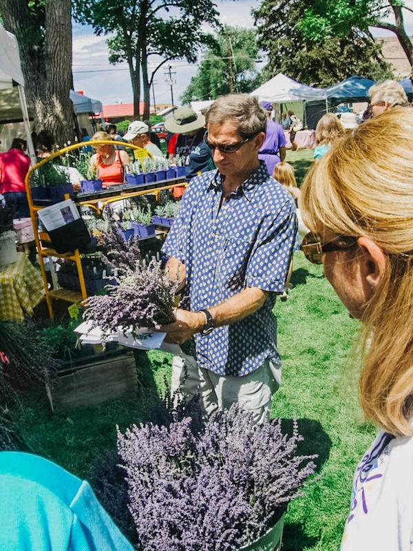 man holding lavender at festival-001Web.jpg