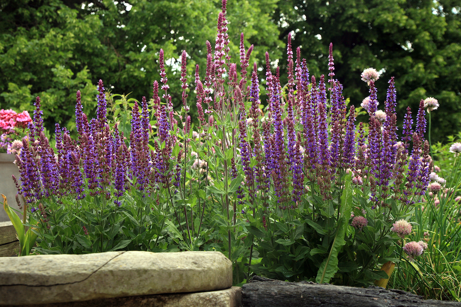 Water-wise perennials brighten the landscape and attract pollinators.