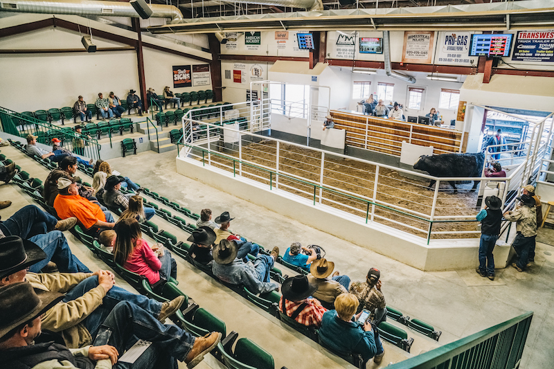 The Western Slope Cattlemen's Auction in Loma, CO
