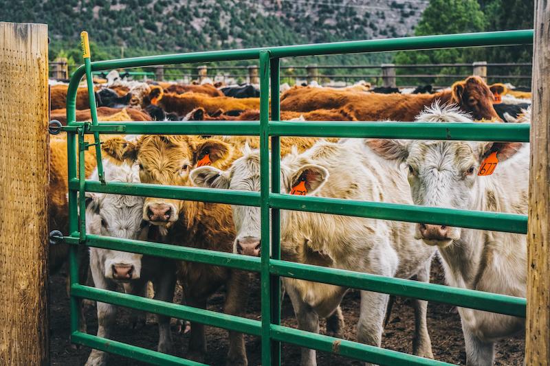 Ranching-018Web.jpg