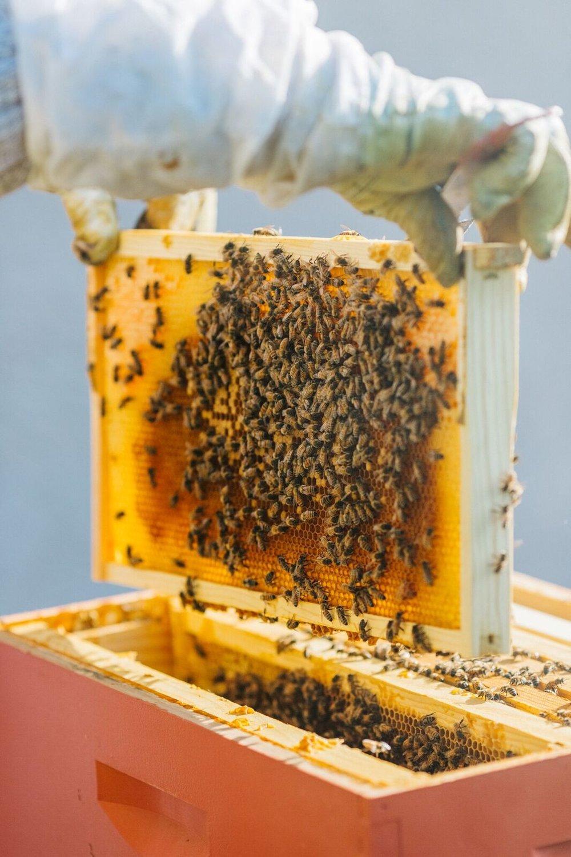 Bee2.jpeg