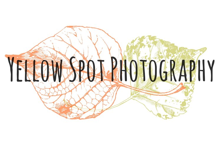 Yellow Spot Photography