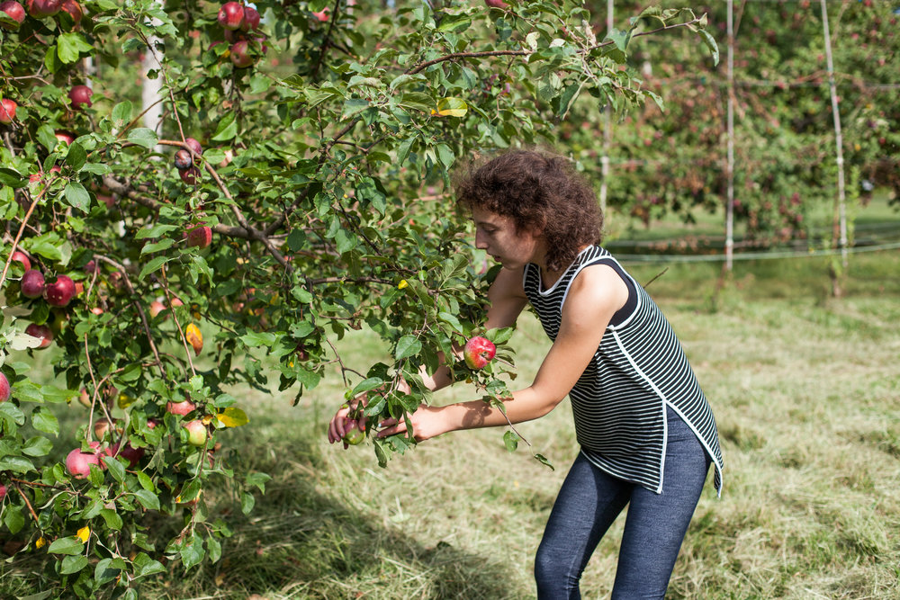 Socially therapeutic horticulture - Socially Therapeutic Horticulture involves gardening activities that are designed with personal benefits in mind, such as improved quality of life, memory, sense of accomplishment, fine and gross motor skills, social interaction, and reduced stress and anxiety.