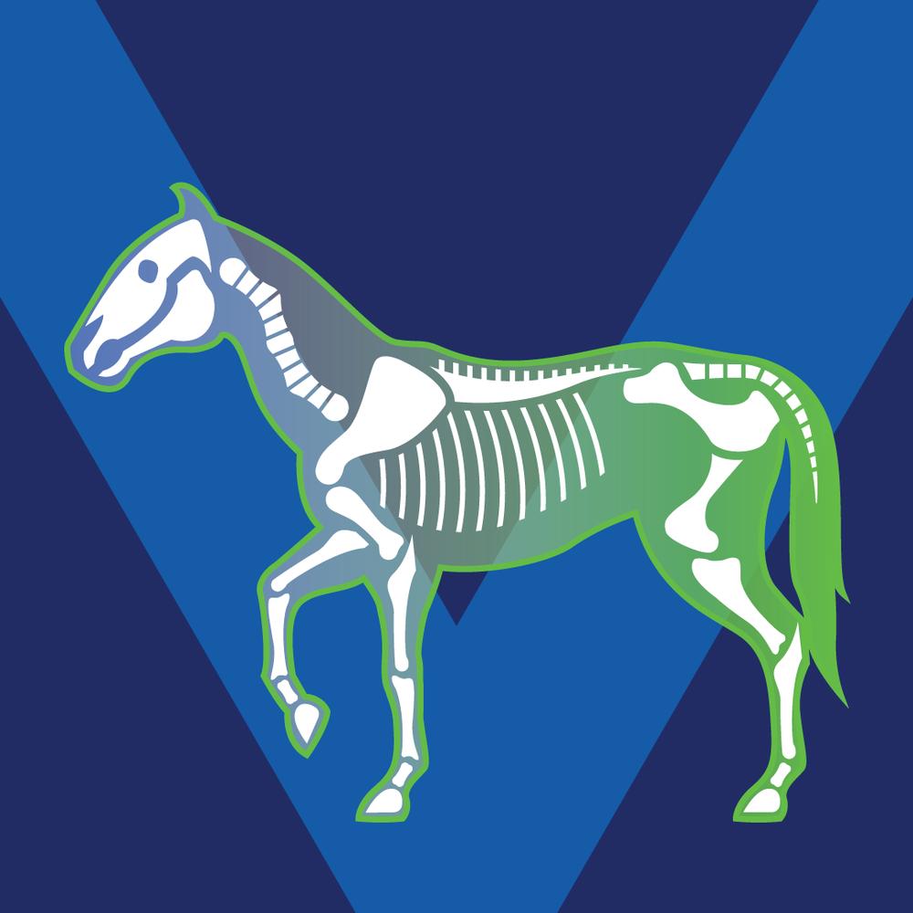 Horse Skeleton -