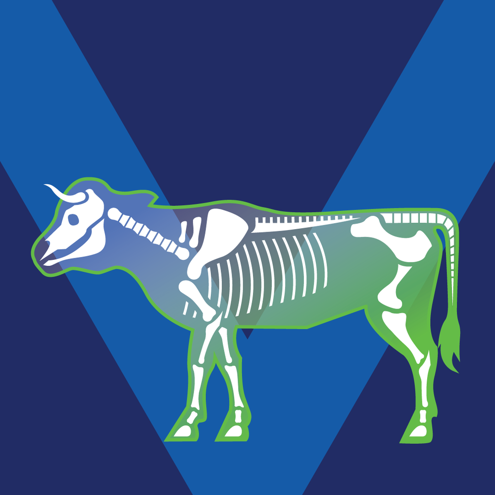 Ox Skeleton -