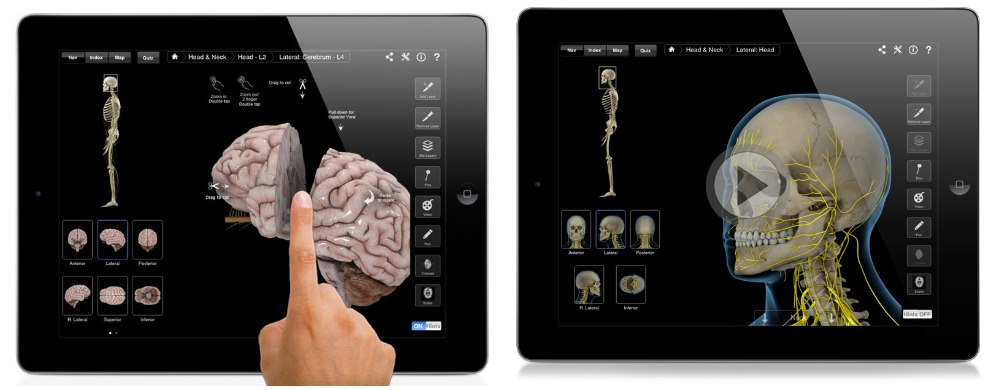 Brain & Nervous System Pro III.jpg