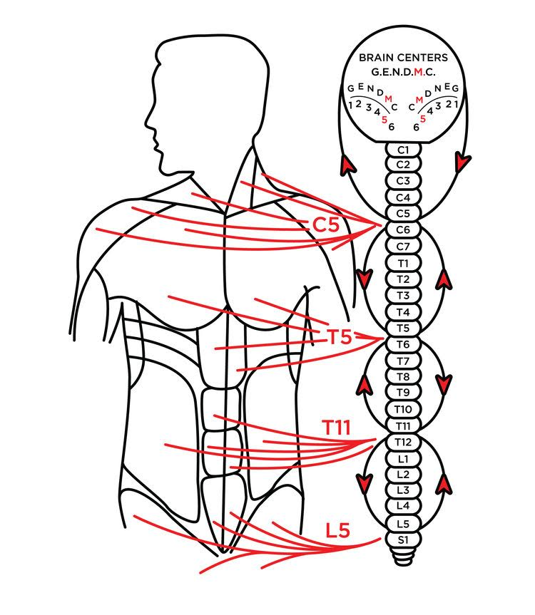 Effects  - -Neck region     -Arms     -Movement                -Proper nerve life     -Chest     -Abdomen         -Back     -Muscle contractures    -Normal tone  -Straightening of distortions and curvatures     -Pain relief     -Feeling of ease     -Walking       -Suppleness     -Increased strength                  -Pelvic region     -Thighs     -Legs     -Feet        -RelaxedThis zone returns all muscles to normal and eliminates pain. Possible emotional connection: Feeling mentally overloaded