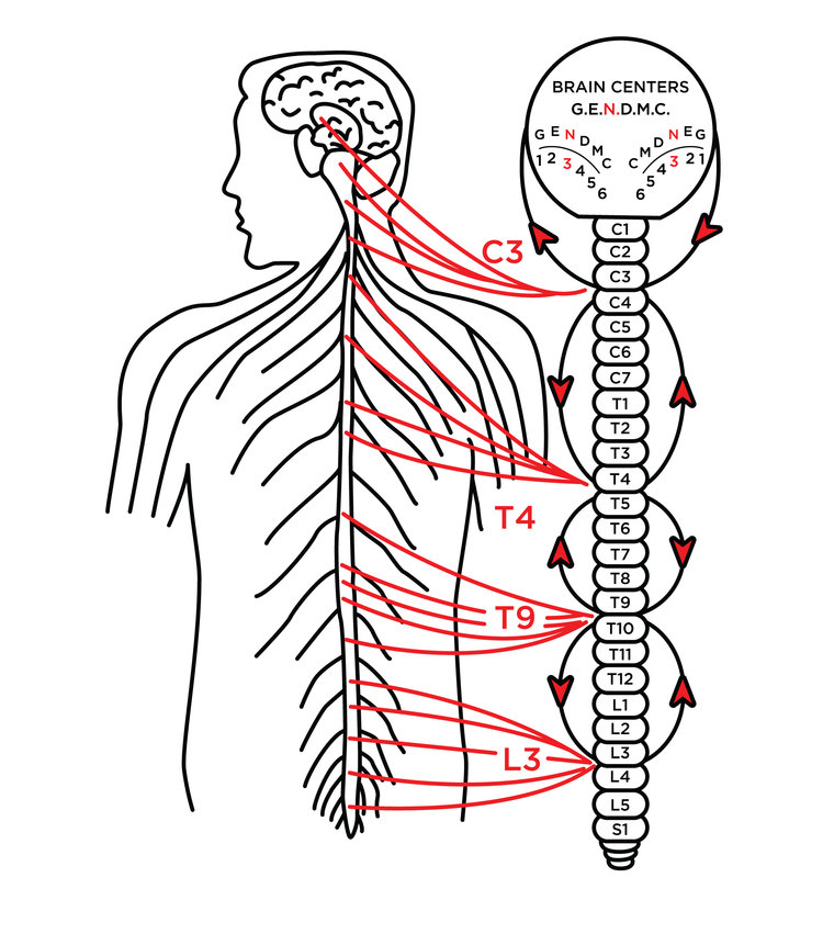 "The Nervous System - This Zone consists of 45 miles of nerves and is considered the Master balancing system of your body. It normally switches you ""OFF"" and ""ON"". It allows you to relax, digest food and sleep well at night; at the same time it gets you up in the morning refreshed, energized and ready for action. Many people are stuck in an ""ON"" or ""OFF"" state due to their life style, many doctors call this depression or anxiety. This causes an overload of stress to your Nerve system. Just like the electricity in your house, when there is an overload, the fuses burn out. When your Nerve Zone ""burns out"", you have low energy and loose your drive for life. Lack of sleep, poor diet, too little exercise and prolonged emotional stress can all wreak havoc on the Nerve Zone. Physical, mental, or chemical stress can cause a disturbance in the Brain Center as well as a spinal misalignment or subluxation in the coinciding nerve channels. This disturbance interferes with the proper brain/nerve signals traveling to and from your nervous system creating a multitude of dis-ease and problemsPERFECT NERVE HEALTH: Excellent balance• Strong mental acuity• Normal digestion and elimination• Normal Sleep• Ability to relax and be energized when you want to• Normal sense function, i.e. eyes, ears, nose, etc.• Ability to heal quickly Normal emotional adaptation"