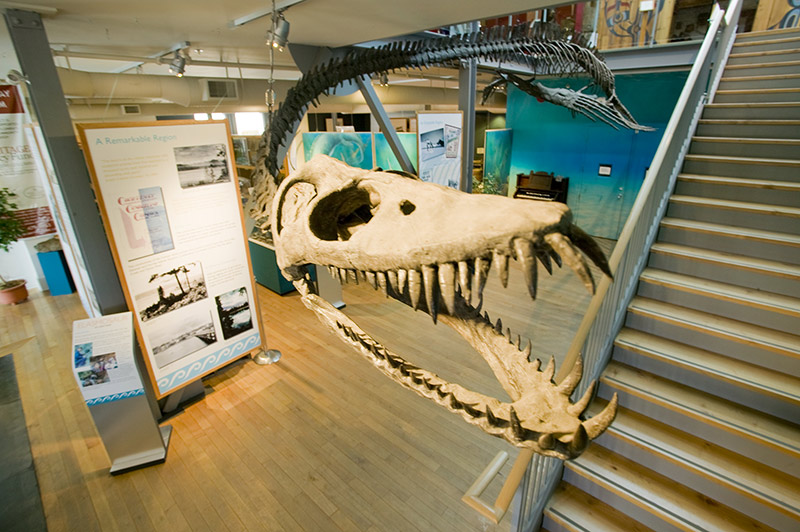 CV_elasmosaur-museum.jpg