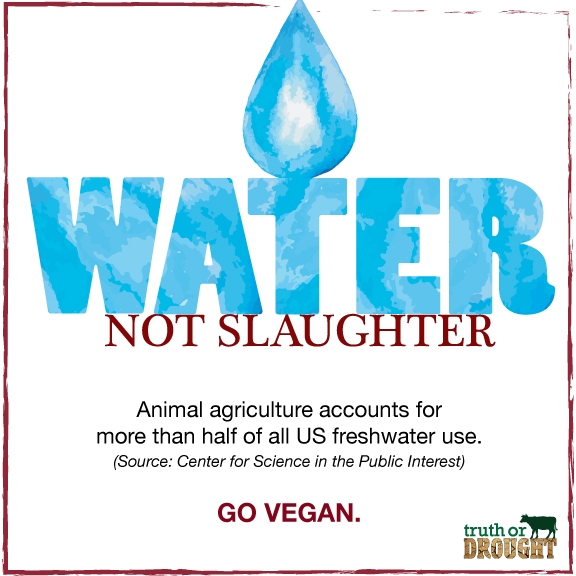 Water-not-slaughter.jpg