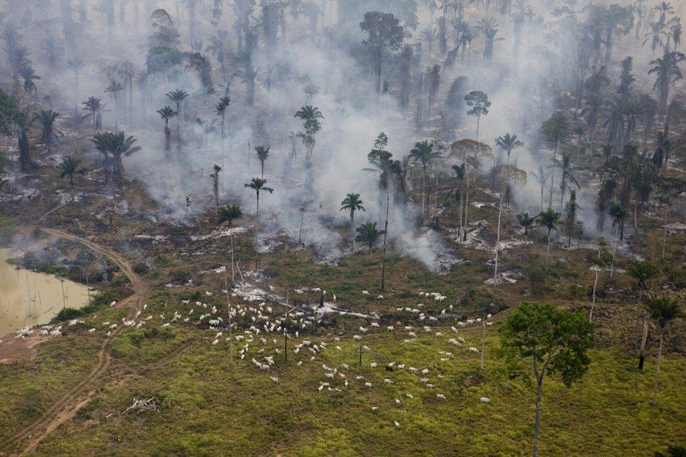 animalagrainforest.jpg