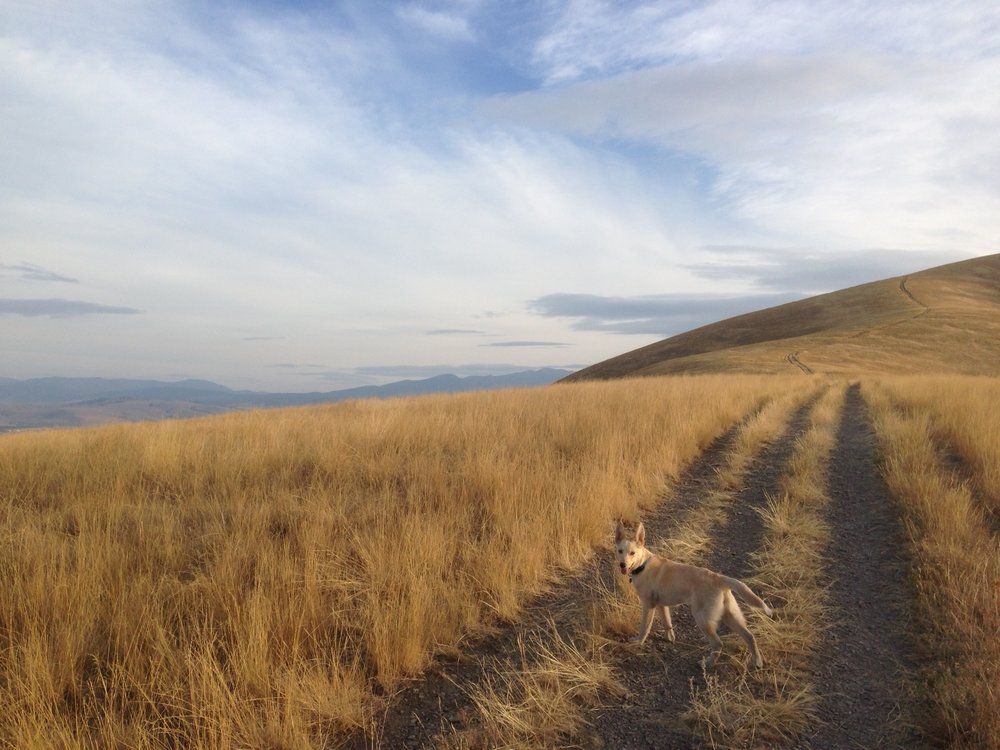 Dog-walking on Mount Sentinel in fall