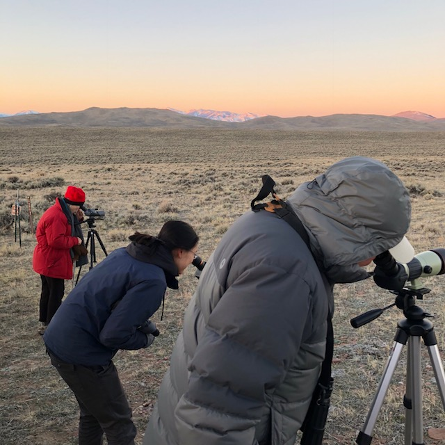 watching a sage grouse lek near the big hole. photo by christine morris