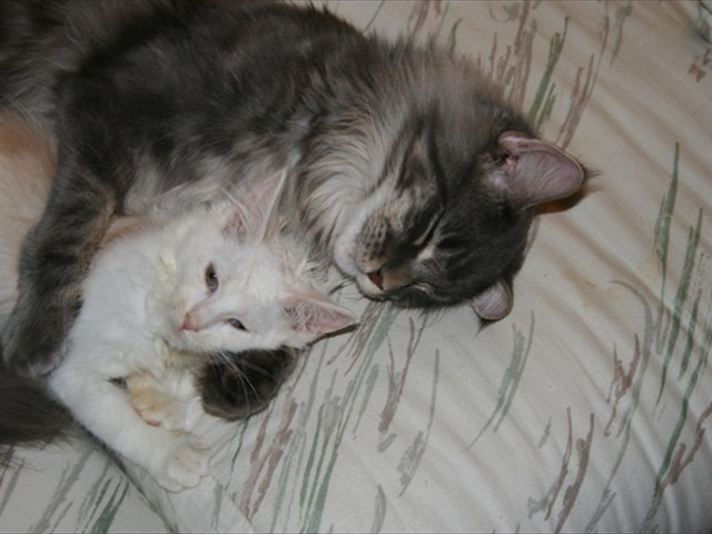 KENPACHI: hugs