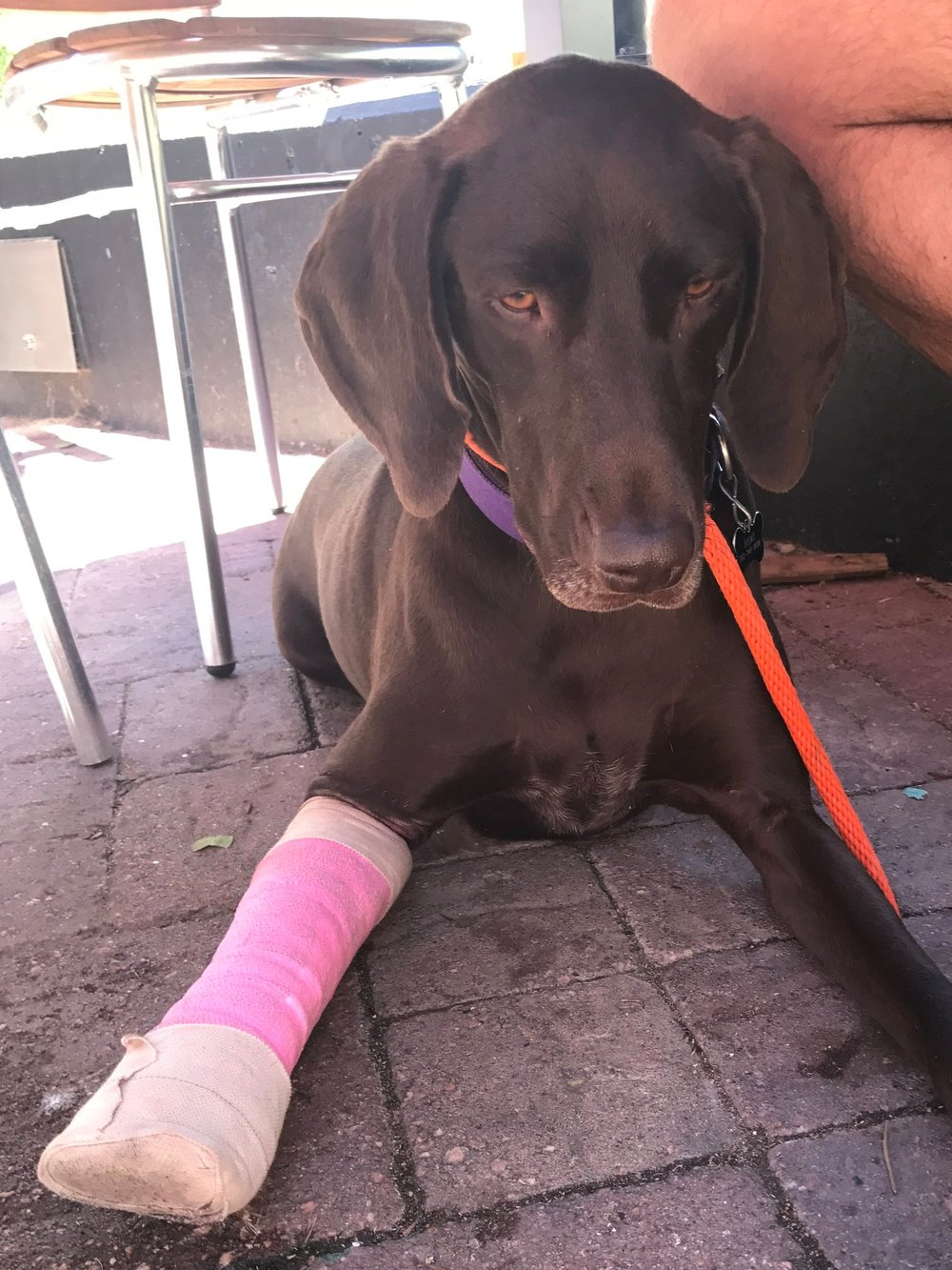 Remi, about four weeks after the accident.