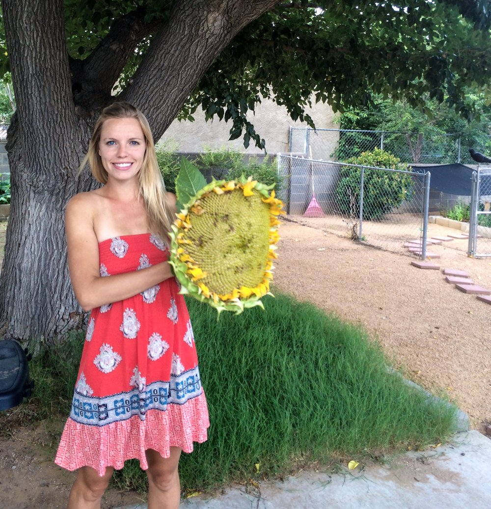 Mammoth sunflowers rock!