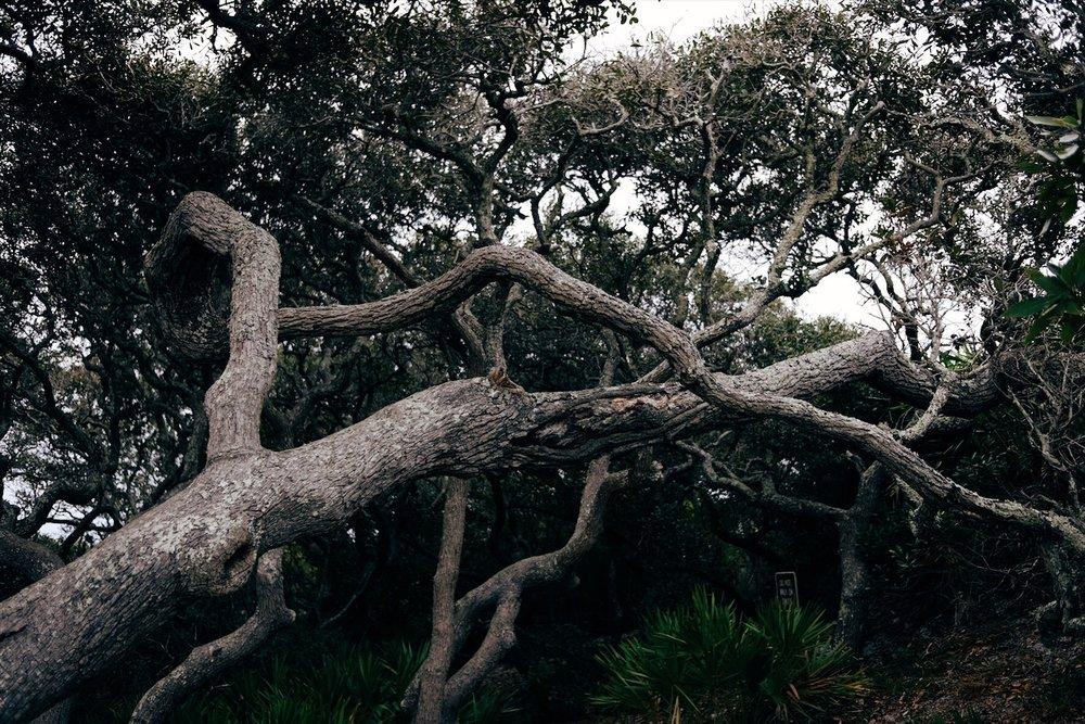 Forest  at Grayton Beach State Park, FL