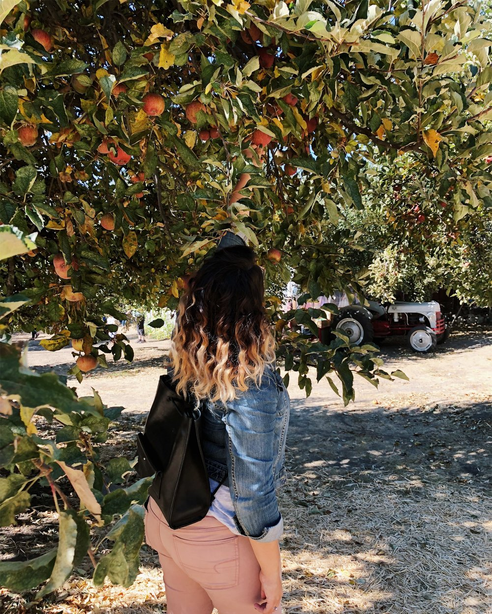 applepicking_3.jpg