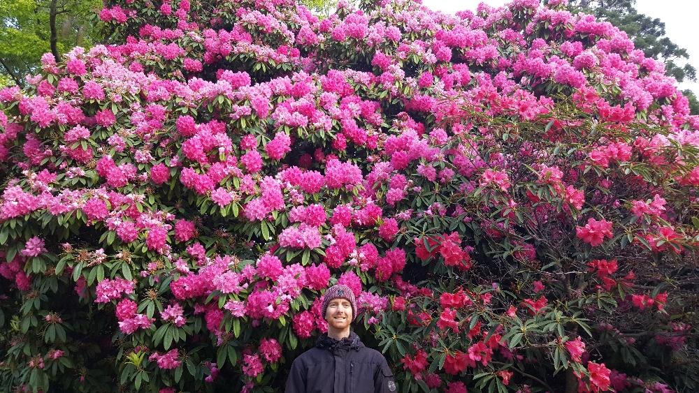 Queenstown pink flowers.jpg