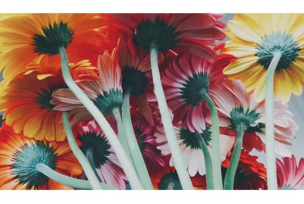 laurensherritt_flowers.jpg
