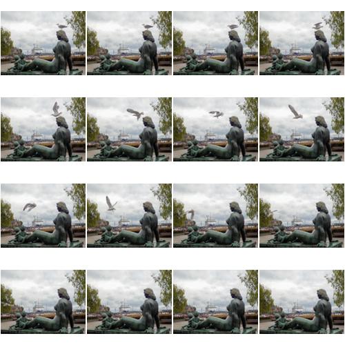 ProCapturella kuvattu lokin lentoonlähtö.