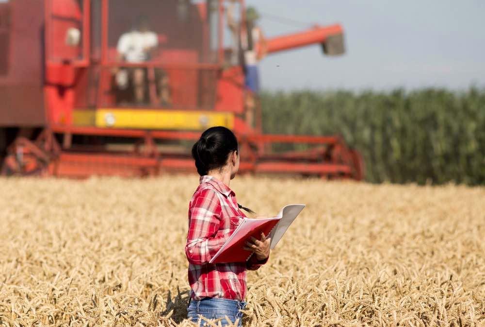 web wheat harvest.jpg
