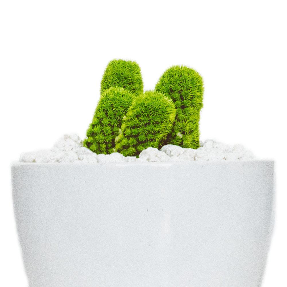 cactus vert.jpg