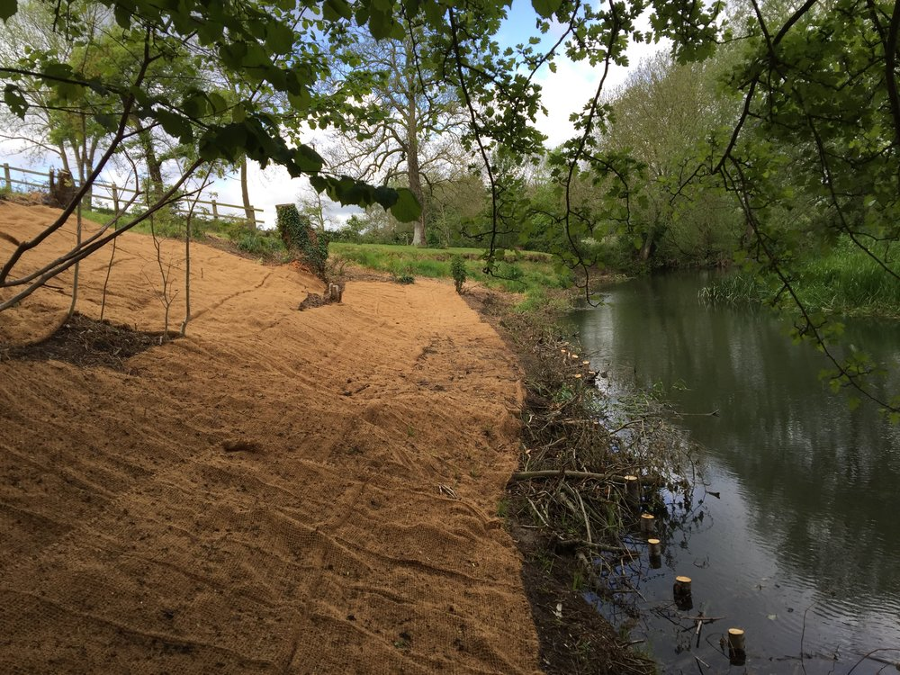 New Bank profile with a natural woven geo-textile and a live willow revetment at the foot of the bank.