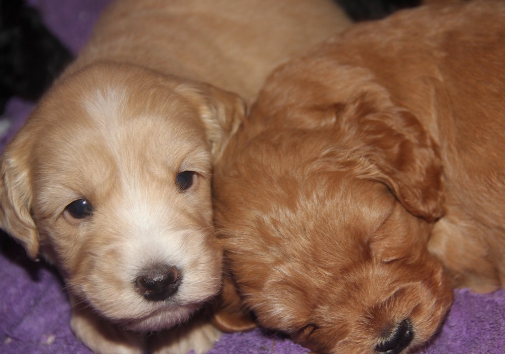 There's no time to sleep. New litters are on their way. -