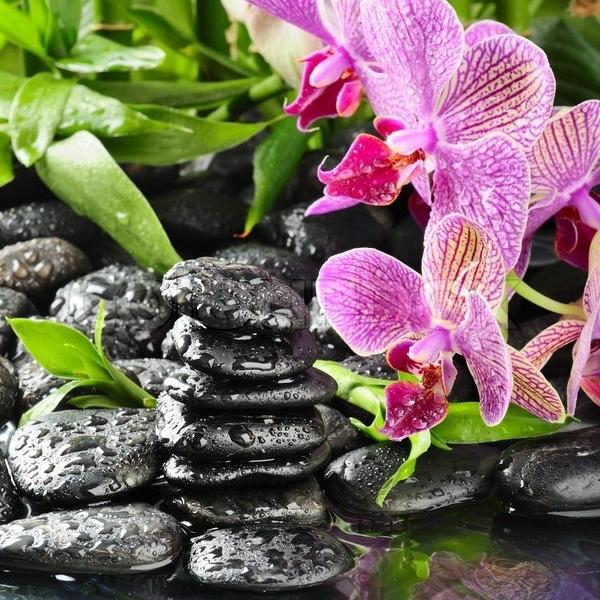 2218701-zen-basalt-stones-and-orchid-with-dew.jpg