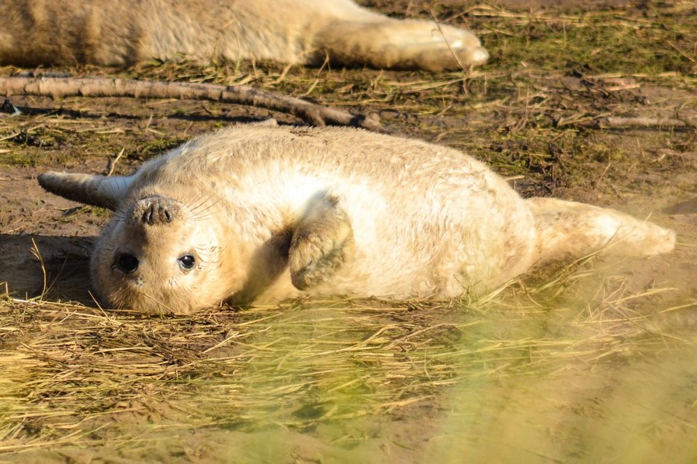 Seal spotting - - The Rural Travel Guide