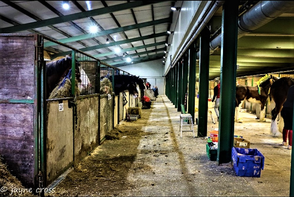 Stable tours - - Jayne Cross