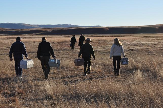 A group of NBFFCC employees going out to release black-footed ferrets! Credit: NPS