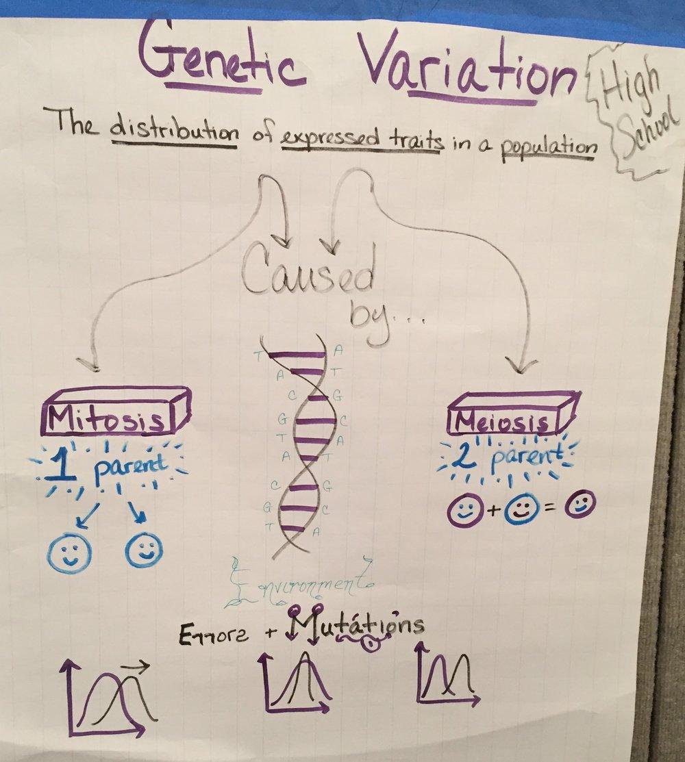 HS - Inheritance and Variation.JPG