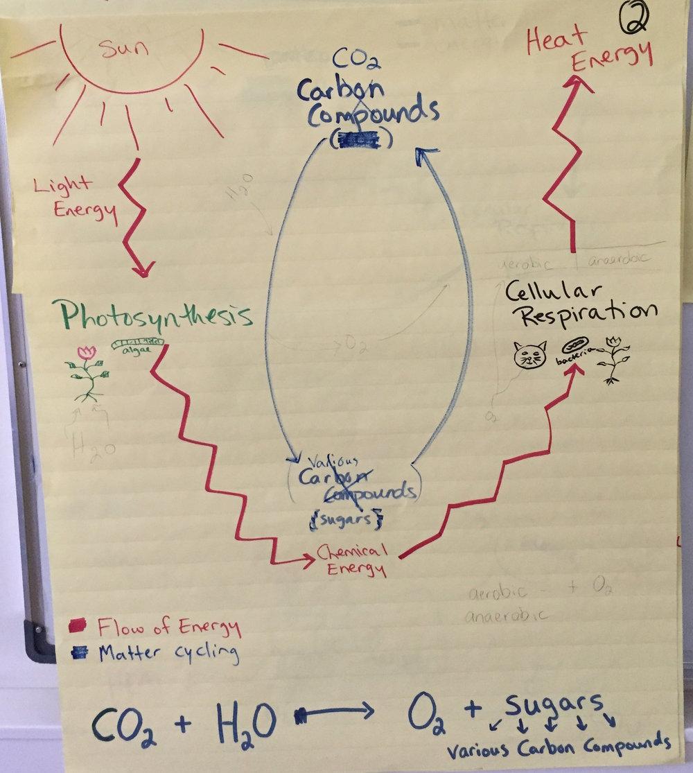 HS Matter and Energy Life.JPG