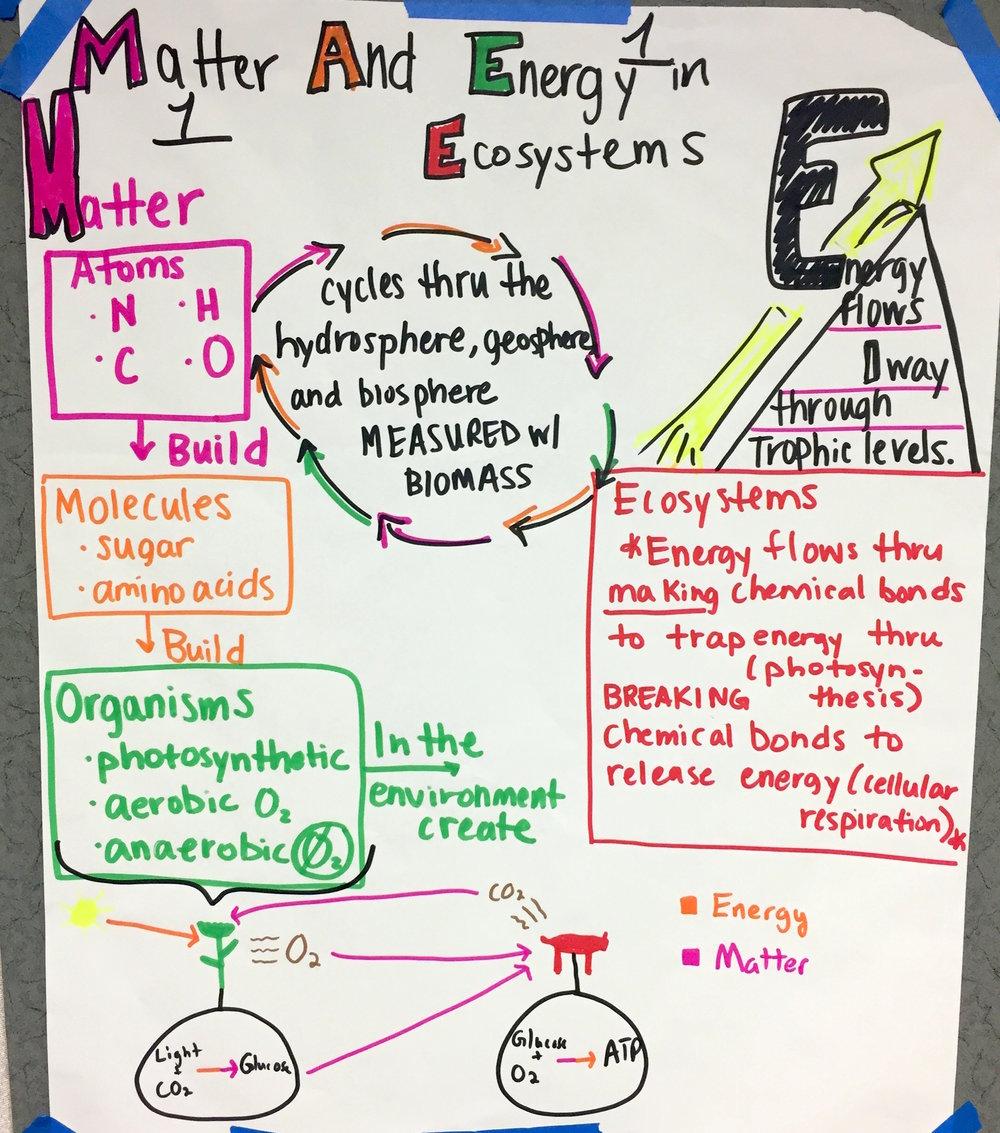 HS Ecosystems.JPG