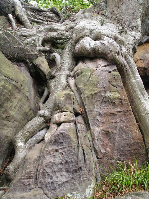 Biological weathering, Harrison Rocks - geograph.org.uk