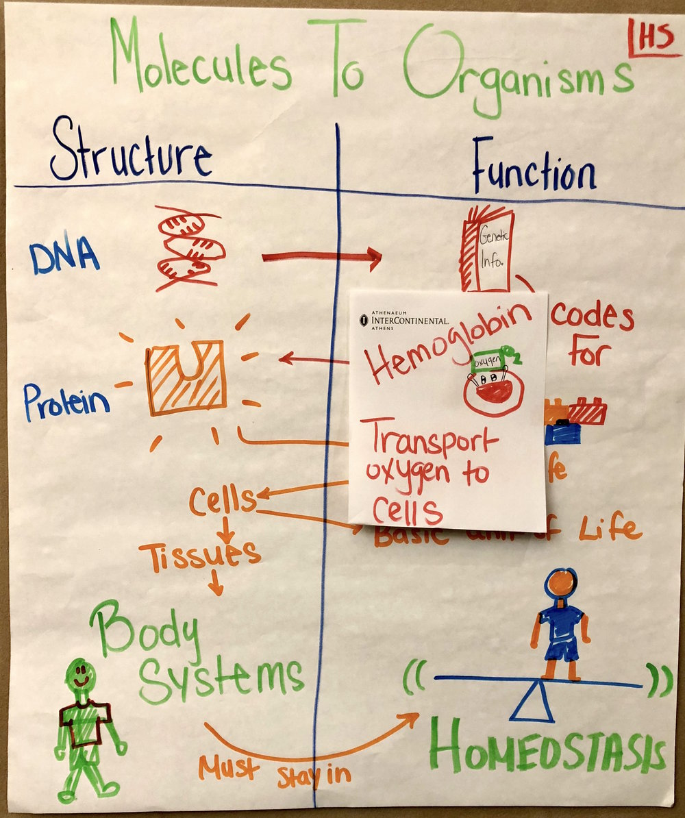 ACHSMoleculesToOrganisms.jpg