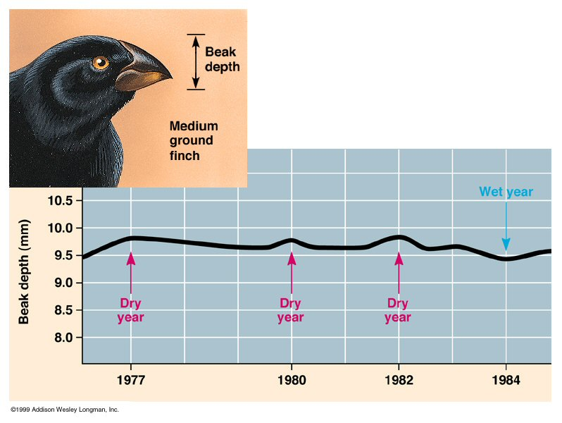 139392_Finch_Beak_adaptation.JPG