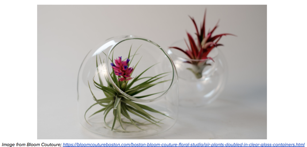 air plant.png