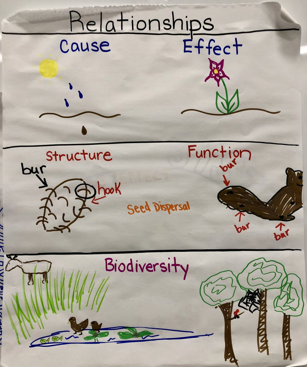 Grade 2 Biodiversity and Ecosystems.jpg