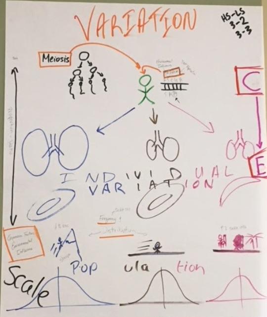 HS Unit - Family Wreath vs  Family Tree (HS-LS3-2, HS-LS3-3