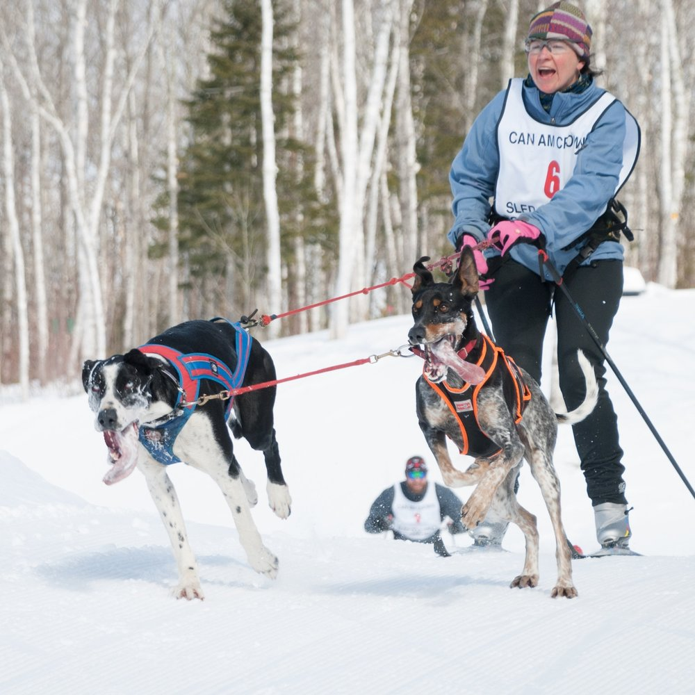 Skijoring in Fort Kent.