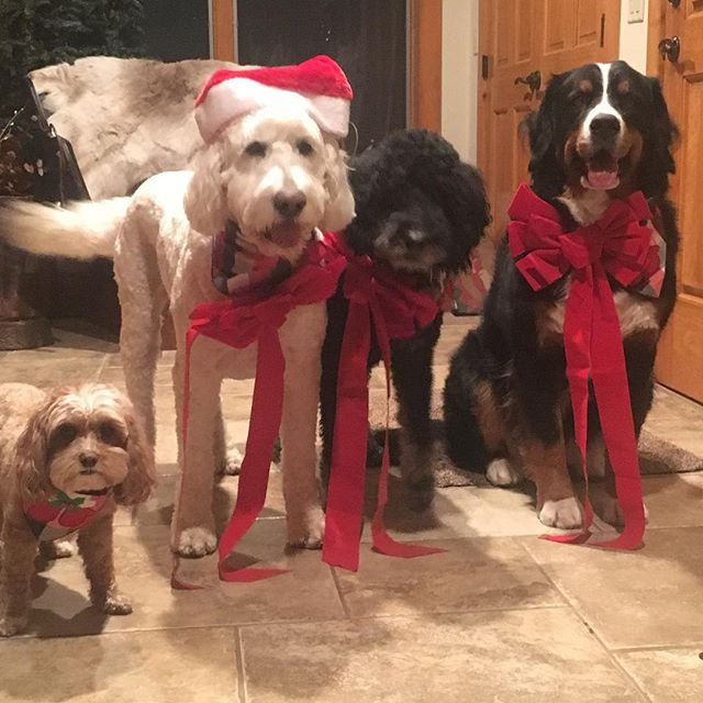 Merry Christmas! #santapaws #happyholidays #santaiscomingtotown