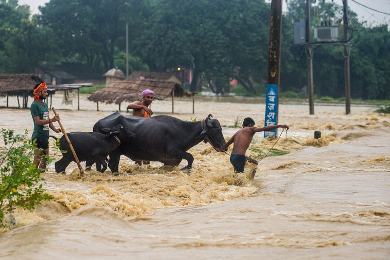 Nepali residents move their buffalos across a flooded area at Birgunj Parsa district, some 200km south of Kathmandu, on August 13, 2017. | AFP/Getty Images